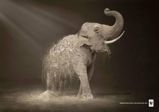 La-desertificación-destruye-6000-especies-cada-año1