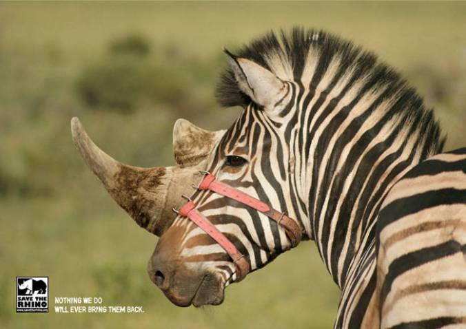 Salvemos-el-rinoceronte1