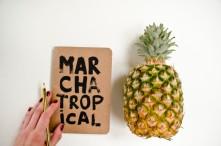 tropical-640x425